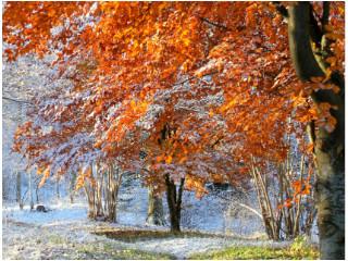 Auf Herbst und Winter folgt wieder ein Frühling